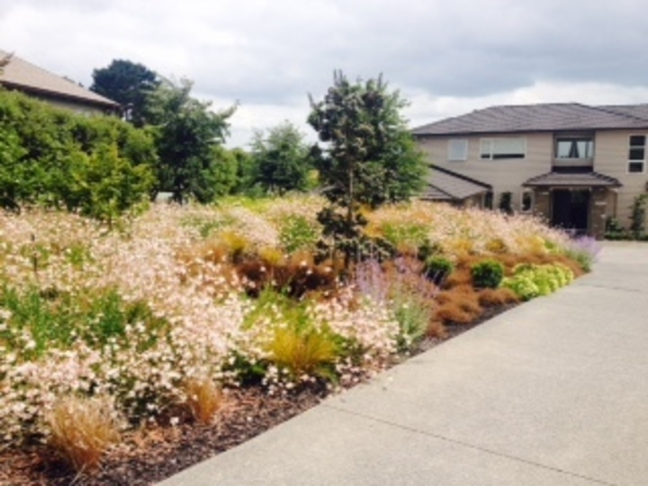 Newly planted garden | DHD Landscape